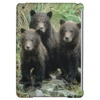Three Grizzly Bear Cubs or Coys (Cub of the