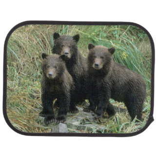 Three Grizzly Bear Cubs or Coys (Cub of the Car Mat