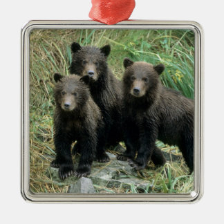 Three Grizzly Bear Cubs or Coys (Cub of the Christmas Ornament