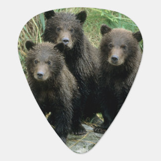Three Grizzly Bear Cubs or Coys (Cub of the Guitar Pick