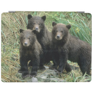 Three Grizzly Bear Cubs or Coys (Cub of the iPad Cover