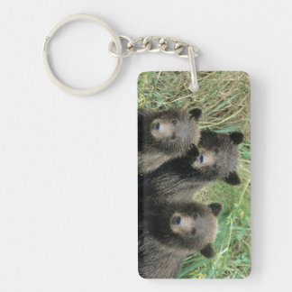 Three Grizzly Bear Cubs or Coys (Cub of the Key Ring