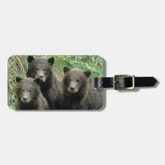 Three Grizzly Bear Cubs or Coys (Cub of the Luggage Tag