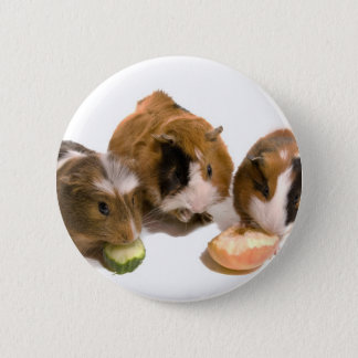 three guinea pigs who eat, 6 cm round badge
