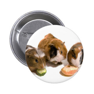 three guinea pigs who eat, 6 cm round badge