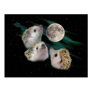 Three Hedgehog Moon Postcard
