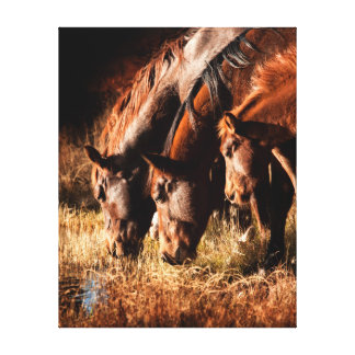 Three horses drinking in dusky light stretched canvas print