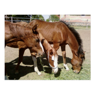 Three Horses Postcards