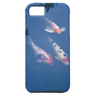 Three Japanese koi fish in pond iPhone 5 Case