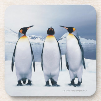 Three King Penguins Coaster