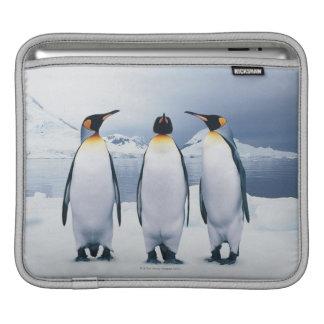 Three King Penguins iPad Sleeve