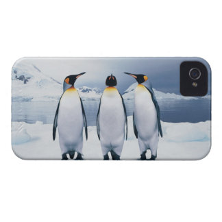 Three King Penguins iPhone 4 Case