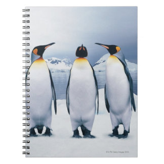 Three King Penguins Spiral Note Books