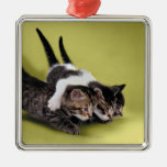 Three kittens hugging each other christmas tree ornaments