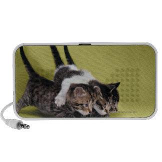 Three kittens hugging each other laptop speakers