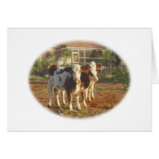 Three Little Calves. Greeting Card