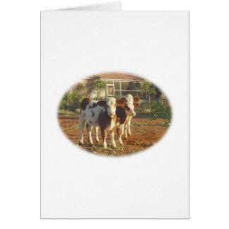 Three Little Calves. Card