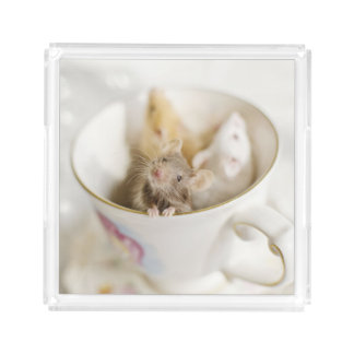 Three little mice siting in cup acrylic tray