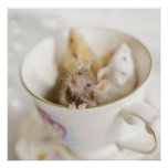 Three little mice siting in cup poster