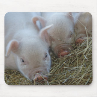 Three Little Pigs Mouse Mat