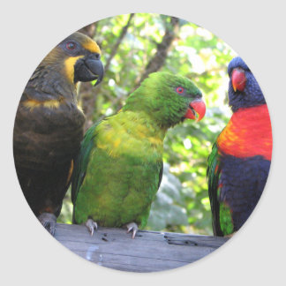 Three Lorikeets Classic Round Sticker