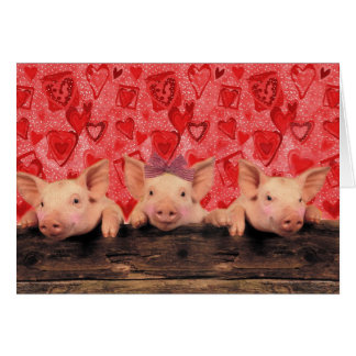 three lovely valentine pigs card - Valentine Pig