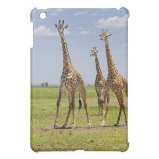 three Masai giraffes, Giraffa camelopardalis Case For The iPad Mini