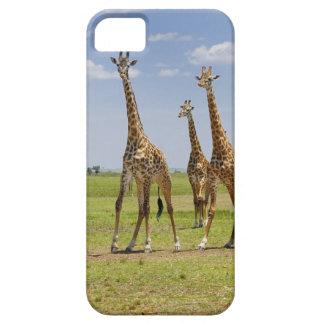 three Masai giraffes, Giraffa camelopardalis iPhone 5 Cover