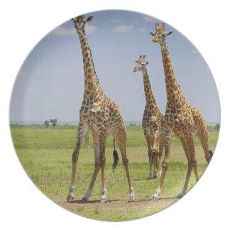 three Masai giraffes, Giraffa camelopardalis Party Plates