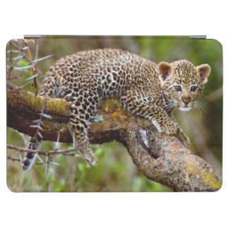 Three Month Old Leopard (Panthera Pardus) Cub iPad Air Cover