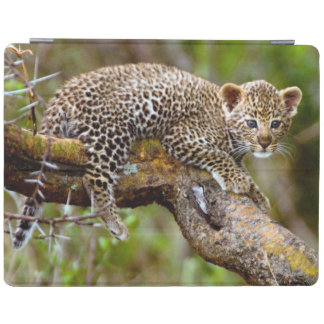 Three Month Old Leopard (Panthera Pardus) Cub iPad Cover