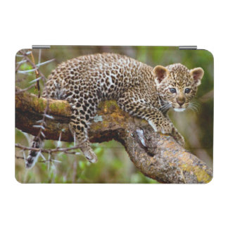 Three Month Old Leopard (Panthera Pardus) Cub iPad Mini Cover