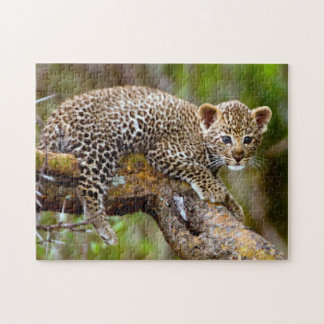 Three Month Old Leopard (Panthera Pardus) Cub Jigsaw Puzzle