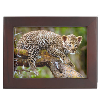 Three Month Old Leopard (Panthera Pardus) Cub Keepsake Box