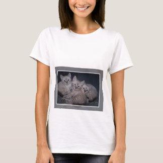 Three of a Kind Lynx Point Siamese Kittens T-Shirt