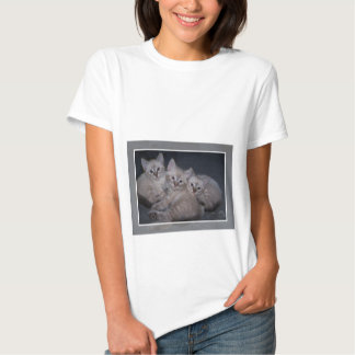 Three of a Kind Lynx Point Siamese Kittens Tee Shirts