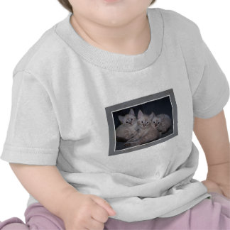 Three of a Kind Lynx Point Siamese Kittens T Shirts