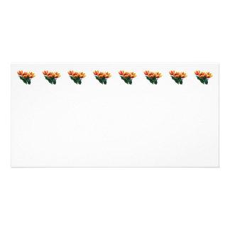 Three Orange and Red Tulips Photo Card