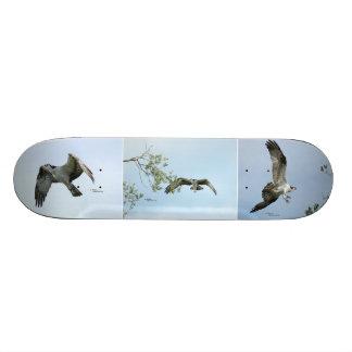 Three Osprey Images Skateboard
