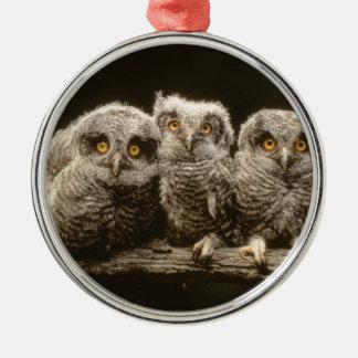 Three Owl Chicks Christmas Ornament
