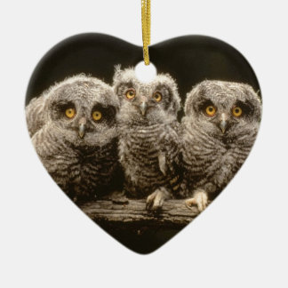 Three Owl Chicks Christmas Ornament