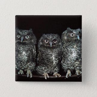three owls 15 cm square badge