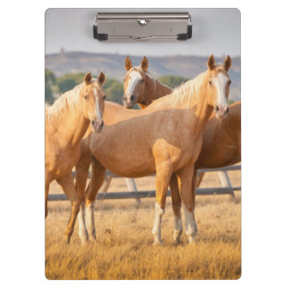 Three Palomino Ponies Clipboard