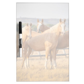 Three Palomino Ponies Dry Erase Board