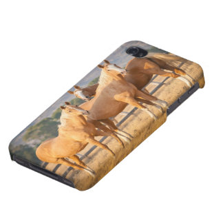 Three Palomino Ponies iPhone 4/4S Cover
