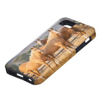Three Palomino Ponies iPhone 5 Cases