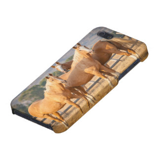Three Palomino Ponies iPhone 5 Cover