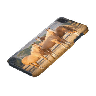 Three Palomino Ponies iPod Touch (5th Generation) Covers