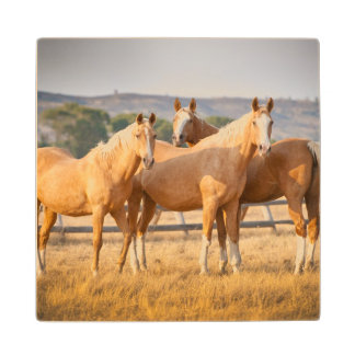 Three Palomino Ponies Wood Coaster