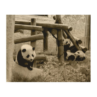 Three Pandas - Sepia Style Wood Wall Decor